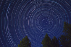 Star Trails with trees. Stacked time lapse of star trails framed with trees taken from the Pacific Northwest with the North Star in the center royalty free stock photography