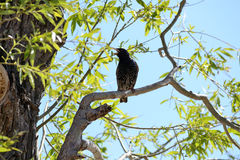 Star twitches from the tree Royalty Free Stock Photos