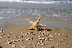 The Star in water. Starfish  the dark blue sea in Greece of Adriatic Stock Photography