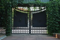 Stara żelazna ornament brama, ogrodzenie przerastający z zielonym Parthenocissus i fotografia stock