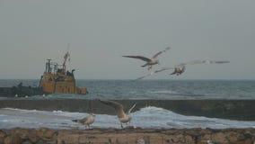 Stara łódź blisko mola na tle seagulls zbiory