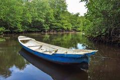 Stara łódź w namorzynowym lesie Zdjęcie Royalty Free