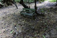 Stara ławka w dżungli Obraz Royalty Free