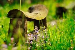 Stara ławka z zielonym natury tłem z gałęziastym f i fiołkiem, Obrazy Stock