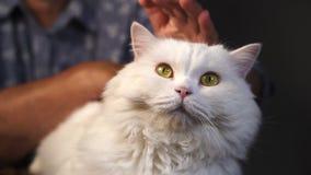 Stara babcia muska białego owłosionego kota w domu Ręki z zmarszczenie karesów domowym puszystym zwierzęciem domowym Miłość, opie zbiory