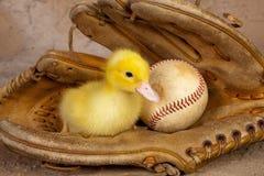Stara baseball rękawiczka i Easter kaczątko obrazy royalty free