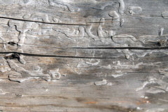 Stara bela Obraz Stock