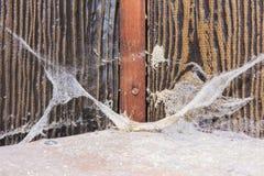 Stara brudna pająk sieć z gęstą pyłu brudu pajęczyną w kącie zaniechany dom fotografia royalty free