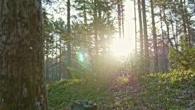 Stara brzoza w lato siberian lesie, Ural, szeroki kąt zbiory