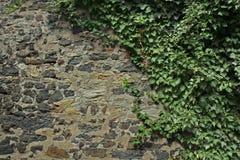 Stara ściana z herbage Obraz Royalty Free