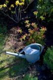 Stara cynkowa metalu podlewania puszka w ogródzie z kwiatami i trawą Zdjęcia Royalty Free