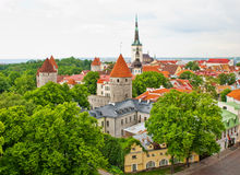 stara czerwień zadasza Tallinn Zdjęcia Royalty Free