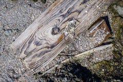Stara drewna i otoczaków tekstura Zdjęcia Royalty Free
