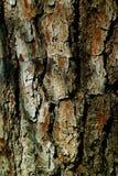 Stara drewniana deska szalunku skorupa na drzewie Fotografia Royalty Free