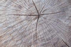 Stara drewniana drzewnego bagażnika tekstura lub tło Obrazy Stock