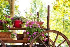 Stara drewniana fura z różowej petuni kolorowymi kwiatami Obrazy Stock