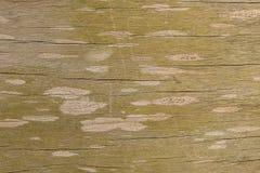 Stara Drewniana tekstura, Drewniany tekstury tło Zdjęcie Royalty Free