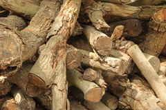 Stara Drewniana tekstura, Drewniany tekstury tło Obraz Royalty Free