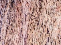Stara drewniana tekstura i tło Obraz Royalty Free