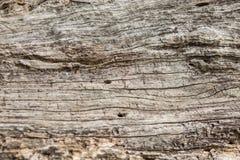 Stara drewniana tekstura, Naturalna drewno powierzchnia, ideał dla tło Obrazy Stock