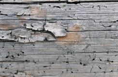 Stara drewniana tekstura z naturalnymi wzorami Wśrodku drzewnego tła Stara grungy i wietrzejąca popielata drewniana ściana zaszal Zdjęcia Royalty Free
