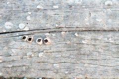Stara drewno powierzchnia, drewniany tło, drewniana tekstura Obraz Stock