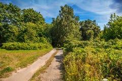 Stara droga gruntowa w polu Obrazy Royalty Free