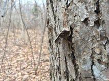 Stara drzewna barkentyna, zakończenie Natura w jesieni Obrazy Royalty Free