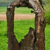 Stara drzewna duża dziura Fotografia Stock