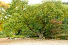 stara drzewna willow Obrazy Stock
