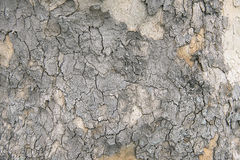 Stara drzewnej barkentyny tła tekstura Fotografia Royalty Free