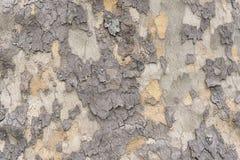 Stara drzewnej barkentyny tła tekstura Obrazy Royalty Free