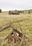 Fox Oregon Zdjęcia Royalty Free