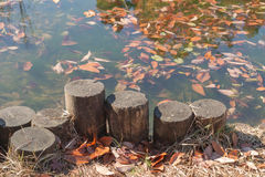Stara fiszorek pozycja obok spadać jesień liścia i stawu Obraz Stock