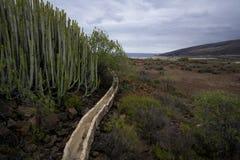 Stara gospodarka wodna dla kaktusów obrazy stock