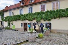 Stara gronowa roślina w Europa, jak promujący w Maribor, Slovenia obraz royalty free