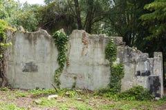 Stara grunge ściana z bluszczem Obraz Stock