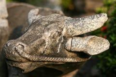 Stara kamień głowa bizon Obraz Stock