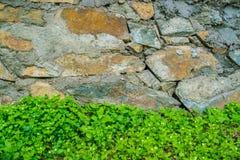 Stara kamienna ściana z liśćmi zdjęcie stock