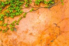 Stara kamienna ściana z liśćmi obraz royalty free