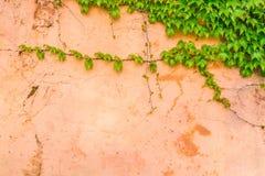 Stara kamienna ściana z liśćmi obrazy royalty free