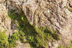 Stara kamienna ściana zakrywająca mech Zdjęcia Stock