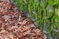 Stara kamienna ściana Zdjęcie Stock