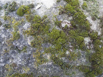 Stara kamienna ściana z zieloną foremką w Paryż Zdjęcie Stock