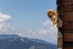 Stara Koźlia czaszka na drewnianej ścianie i naturalny drewno zadaszamy tło Zdjęcia Stock
