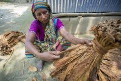 Stara kobieta pracownika przerobowa wiązka tytonie w Dhaka, manikganj, Bangladesz Obraz Stock
