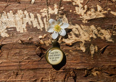 stara kolia na drewnie Zdjęcie Royalty Free