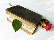 stara księgowa czerwona róża Fotografia Royalty Free