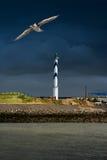 Stara latarnia morska. Seagull. Fotografia Royalty Free