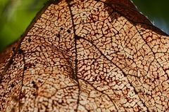 Stara liść tekstura Zdjęcia Stock